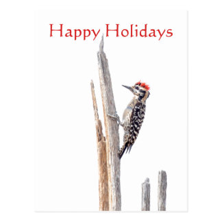 Ladder-Backed Woodpecker, Happy Holidays Postcard