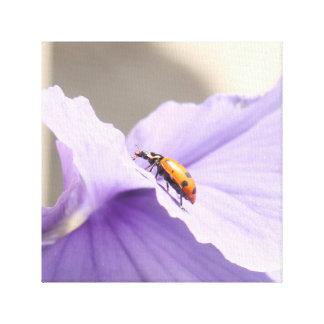 Lady Bug Canvas