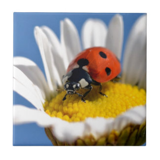 Lady bug on daisy small square tile
