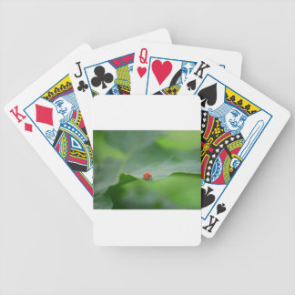 LADY BUG ON LEAF AUSTRALIA BICYCLE PLAYING CARDS