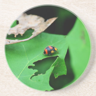 LADY BUG ON LEAF AUSTRALIA COASTER