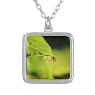 LADY BUG ON LEAF QUEENSLAND AUSTRALIA SILVER PLATED NECKLACE