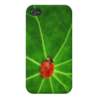 Lady Bug Print Iphone Case iPhone 4 Case