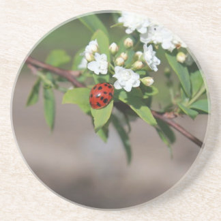 Lady Bug resting near so white flowers in bloom Beverage Coaster