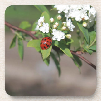 Lady Bug resting near so white flowers in bloom Coaster