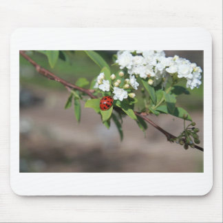 Lady Bug resting near so white flowers in bloom Mouse Pad