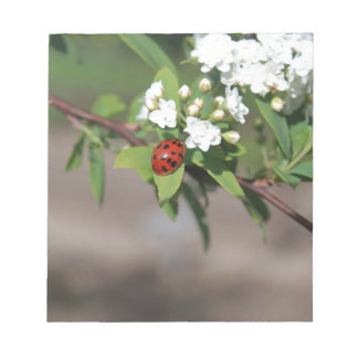 Lady Bug resting near so white flowers in bloom Notepad
