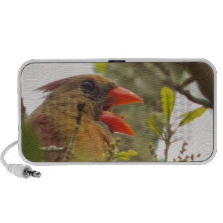 Lady Cardinal's Song iPhone Speaker