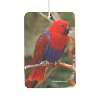 """""""Lady in Red"""" Eclectus Parrot"""