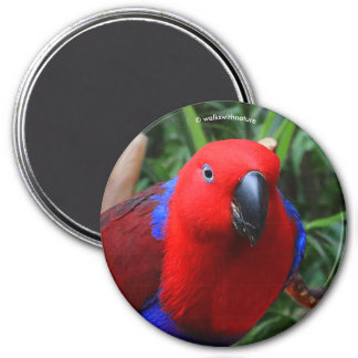 """""""Lady in Red"""" Eclectus Parrot 7.5 Cm Round Magnet"""