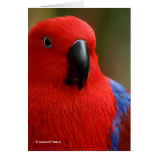 """""""Lady in Red"""" Eclectus Parrot Greeting Card"""