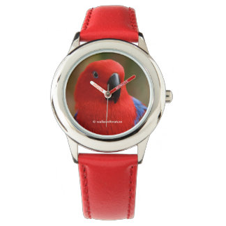 """""""Lady in Red"""" Eclectus Parrot Watches"""