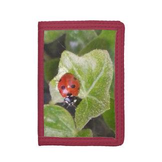 Lady nose ladybird purse purse tri-fold wallets