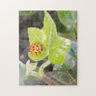 Lady nose ladybird puzzle