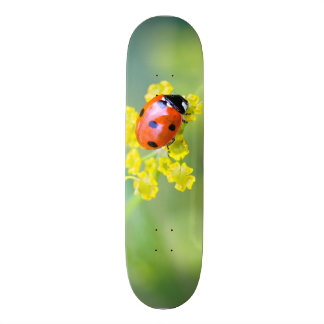 lady on top 19.7 cm skateboard deck
