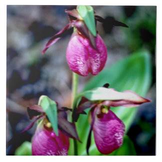 Lady Slipper I, Pink Green Garden Delight Ceramic Tile