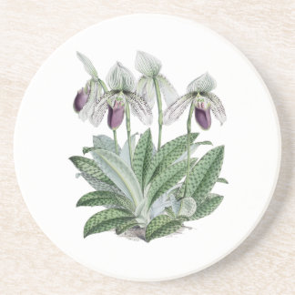 Lady Slipper Orchid Sandstone Drink Coaster