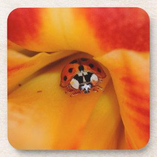 Ladybird Drink Coaster