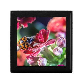 Ladybird Gift Box