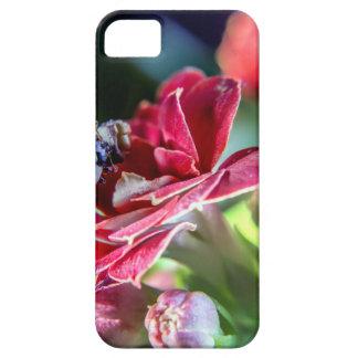 Ladybird iPhone 5 Case