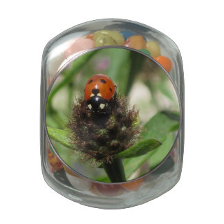 Ladybird Jelly Belly Glass Jar