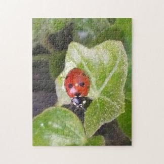 Ladybird lady nose puzzle