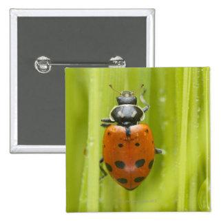 Ladybird on grass, close-up 15 cm square badge