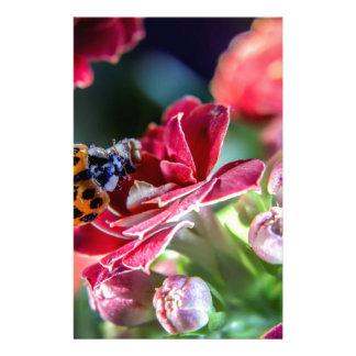 Ladybird Stationery