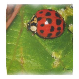 Ladybug bandana