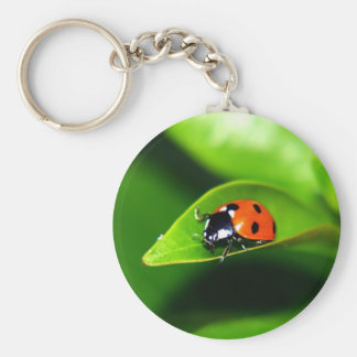 Ladybug Basic Round Button Key Ring