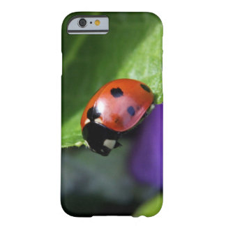 Ladybug case