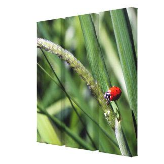 Ladybug (Coccinellidae) Canvas Print
