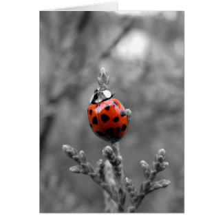 Ladybug ~ Everyday All Occasion Note Card