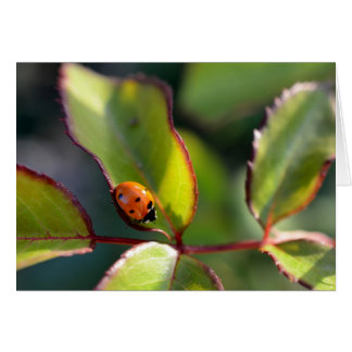 Ladybug greeting card, blank card
