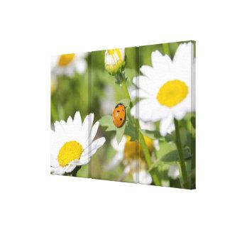 Ladybug in a Daisy Garden Canvas Print