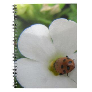 Ladybug Notebook