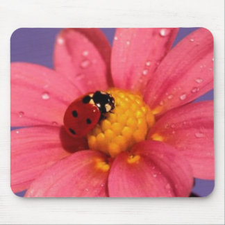 Ladybug On a Pink Daisy Mouse Pad