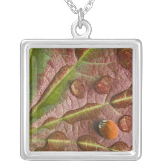 Ladybug on dewy maple leaf. Credit as: Don Square Pendant Necklace