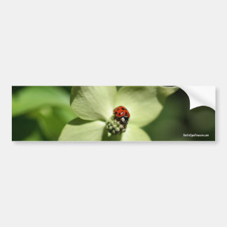Ladybug On Dogwood Nature Photo Bumper Sticker