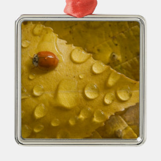 Ladybug on fall-colored leaf. Credit as: Don Christmas Ornaments
