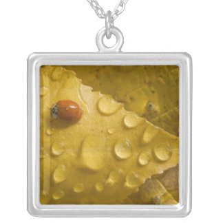Ladybug on fall-colored leaf. Credit as: Don Square Pendant Necklace