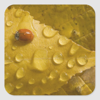 Ladybug on fall-colored leaf. Credit as: Don Square Sticker