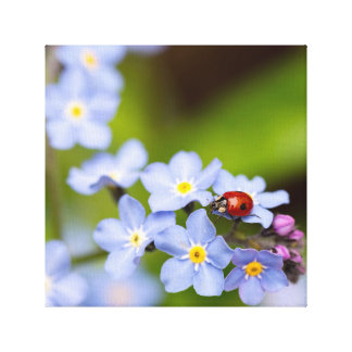Ladybug on Forget-me-not Stretched Canvas Print