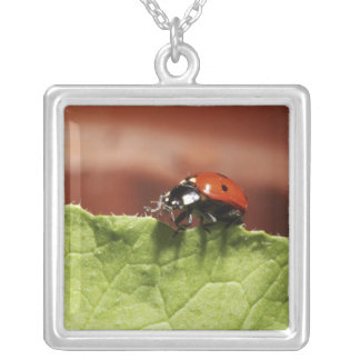 Ladybug on lettuce leaf (MR) Silver Plated Necklace
