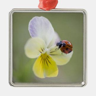 Ladybug on pansy, Biei, Hokkaido, Japan Metal Ornament
