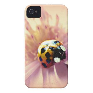 Ladybug on Pink Daisy iPhone 4 Covers