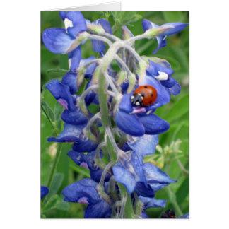 Ladybug on Texas Bluebonnet Card