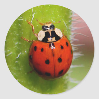 Ladybug on the Sunflower Stalk Classic Round Sticker