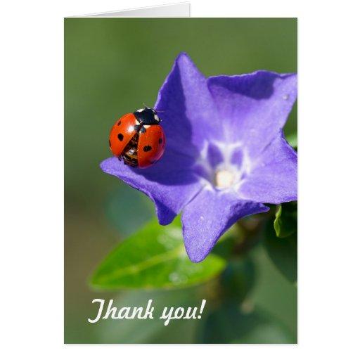 Ladybug Thank you Note Card