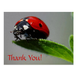 LadyBug Thank You! Postcard